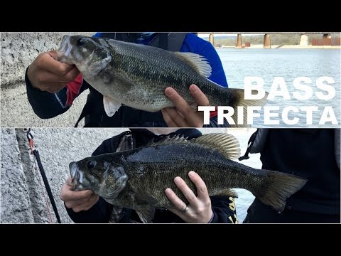 Smallmouth, Largemouth, and Spotted Bass - Fishing Hat Trick on Shiners