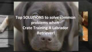 The Top Rated Tips On Crate Training A Labrador Retriever