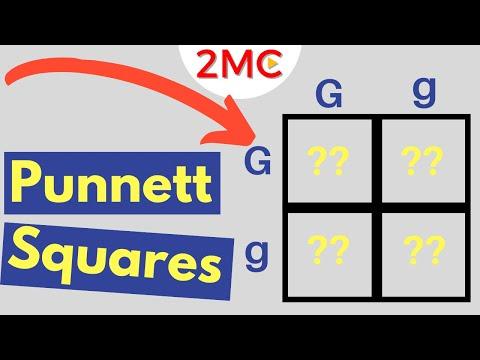 punnett-square-basics-|-mendelian-genetic-crosses