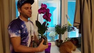 Как ухаживать за орхидеей !!! ЭТОГО ВАМ НИКТО НЕ СКАЖЕТ