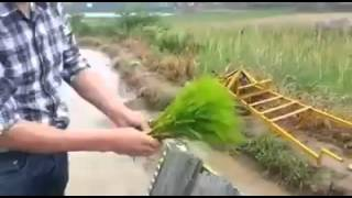 Rice plantation - innovative way