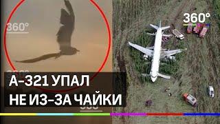 А 321 упал не из за чайки 360 изучил фауну Жуковского