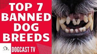 TOP 7 banned (dangerous) dog breeds!  Dogcasttv!