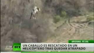 Avistado un 'caballo volador' en EE. UU.