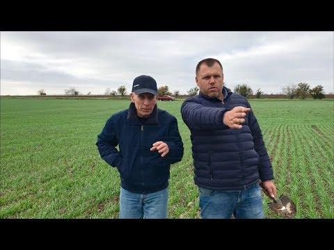 Осеннее применение гербицидов на озимых культурах