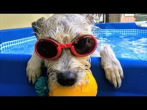 Ringo Goes Swimming at Dog Village