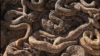 """""""rattlesnake Ridge"""" By S.e. Schlosser 