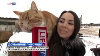 Дикие животные, которых приручили петербуржцы