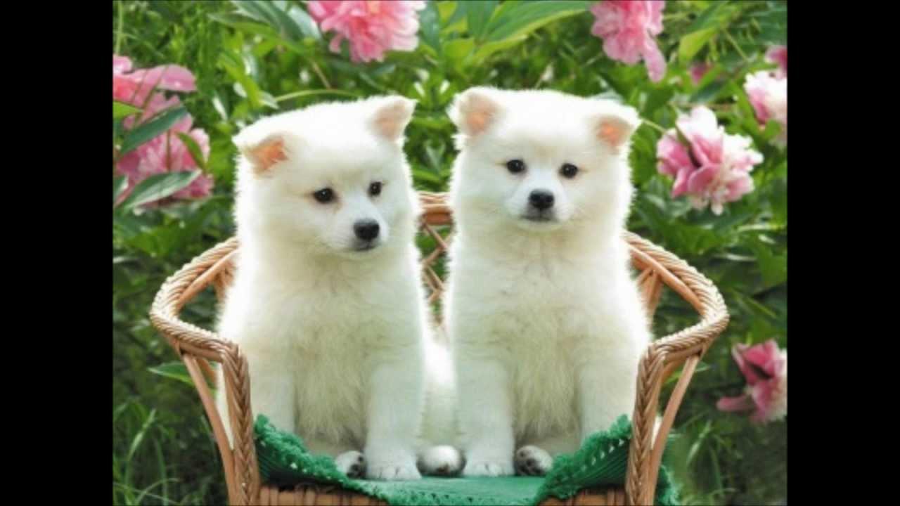 Los Perritos Más Bonitos ¡Preciosos!