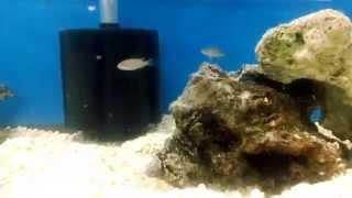 African Cichlid Fish Room Sikcichlids.com