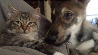 友達以上恋人未満。ラブラブな関係の猫と犬