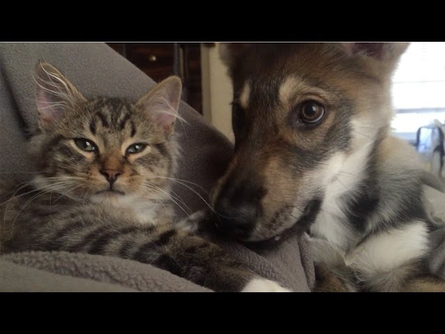 Cat And Dog Are Best Of Friends