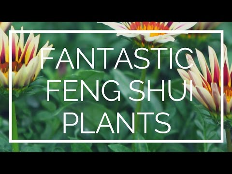 Feng Shui & Plants: The benefits of using plants in your