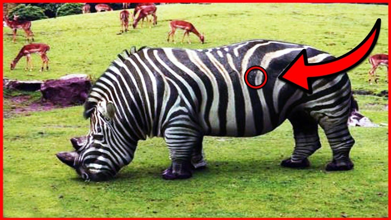 image animaux hybrides