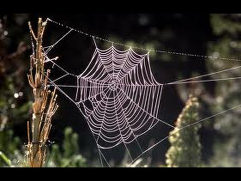 Spider as a Spirit Guide--What it Means When You Are Suddenly Seeing Spiders Everywhere