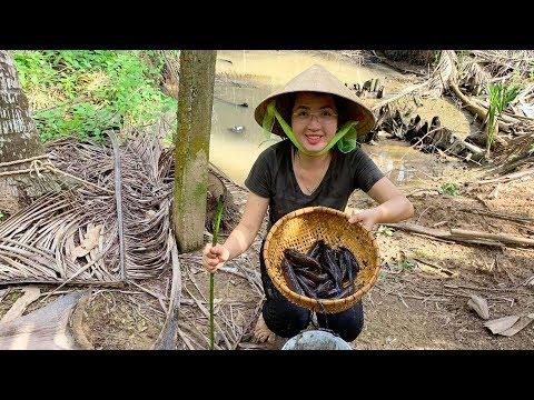 Cách Chọt Bập Lá Bắt Cá Bống Dừa Hiệu Qủa Nhất Của Người Miền Tây | MTTL Tập 238