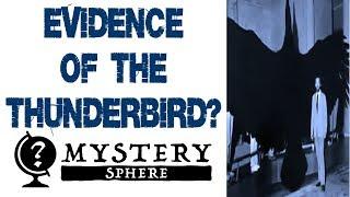 Evidence of The Thunderbird? Do Giant Birds Exist? (Mystery Species Ep 1) - MYSTERY SPHERE