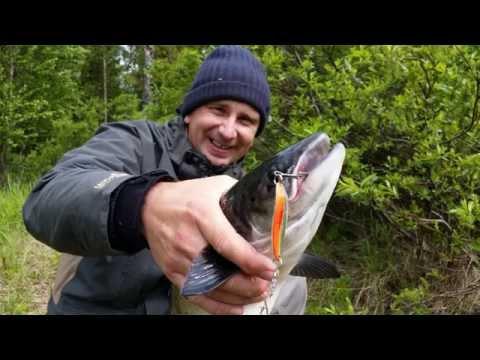 поймано лосося