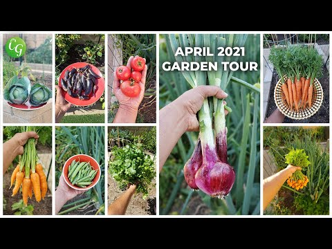 California Gardening April 2021 Garden Tour – Harvests, Gardening Tips & More!
