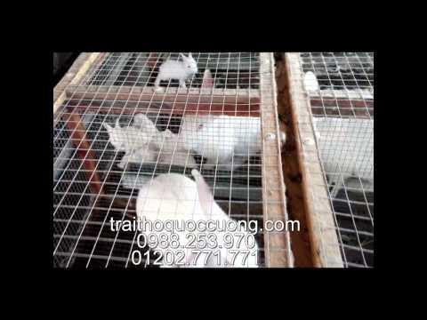 Giới thiệu trang trại thỏ giống Quốc Cường