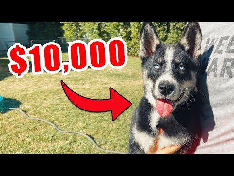 Selling our Puppy for $10,000