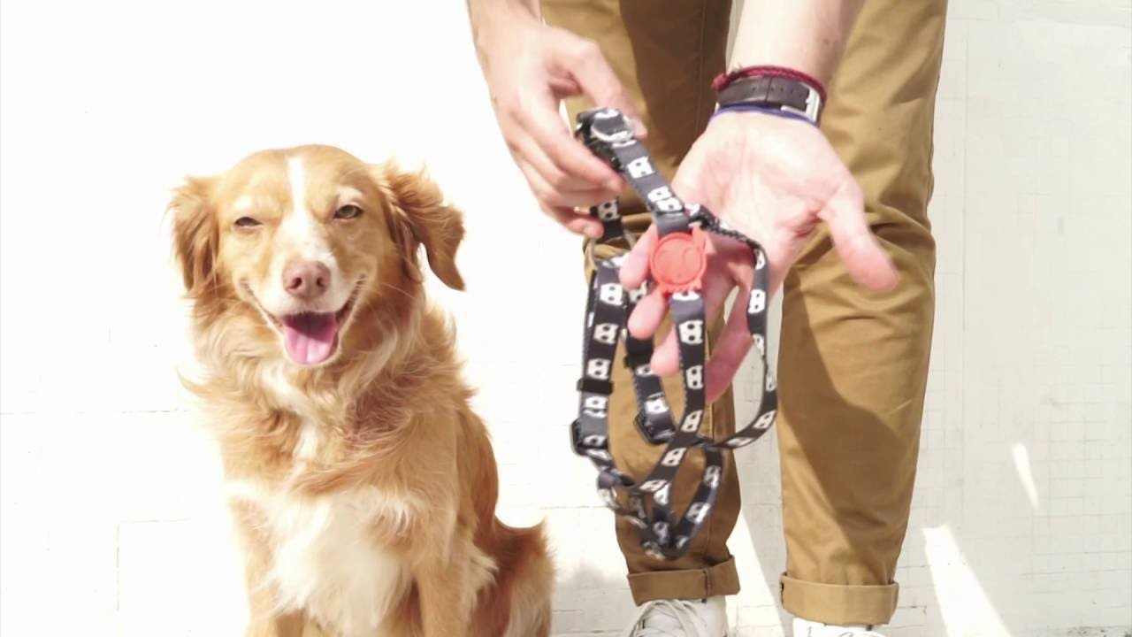 PUT ON A STEP IN DOG HARNESS - YouTube