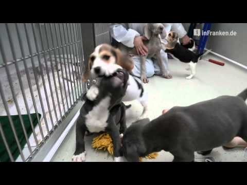 Tierheim Bamberg bekommt 20 Hundewelpen