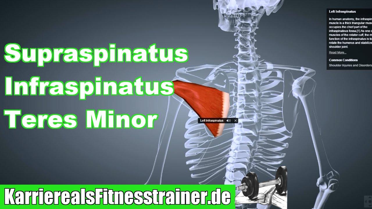 Außenrotatoren (Supraspinatus Infraspinatus Teres Minor) Ansatz ...
