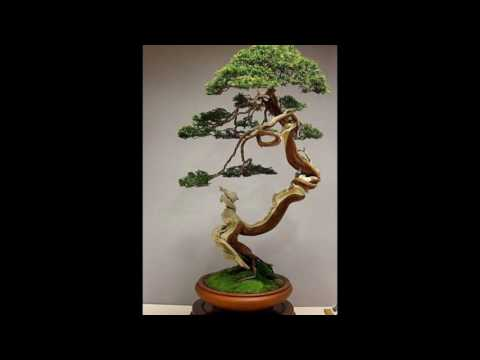 Những cây Bonsai đẹp nhất thế giới 21 (The best of Bonsai trees in the world 21,Bonsai Art of Japan)