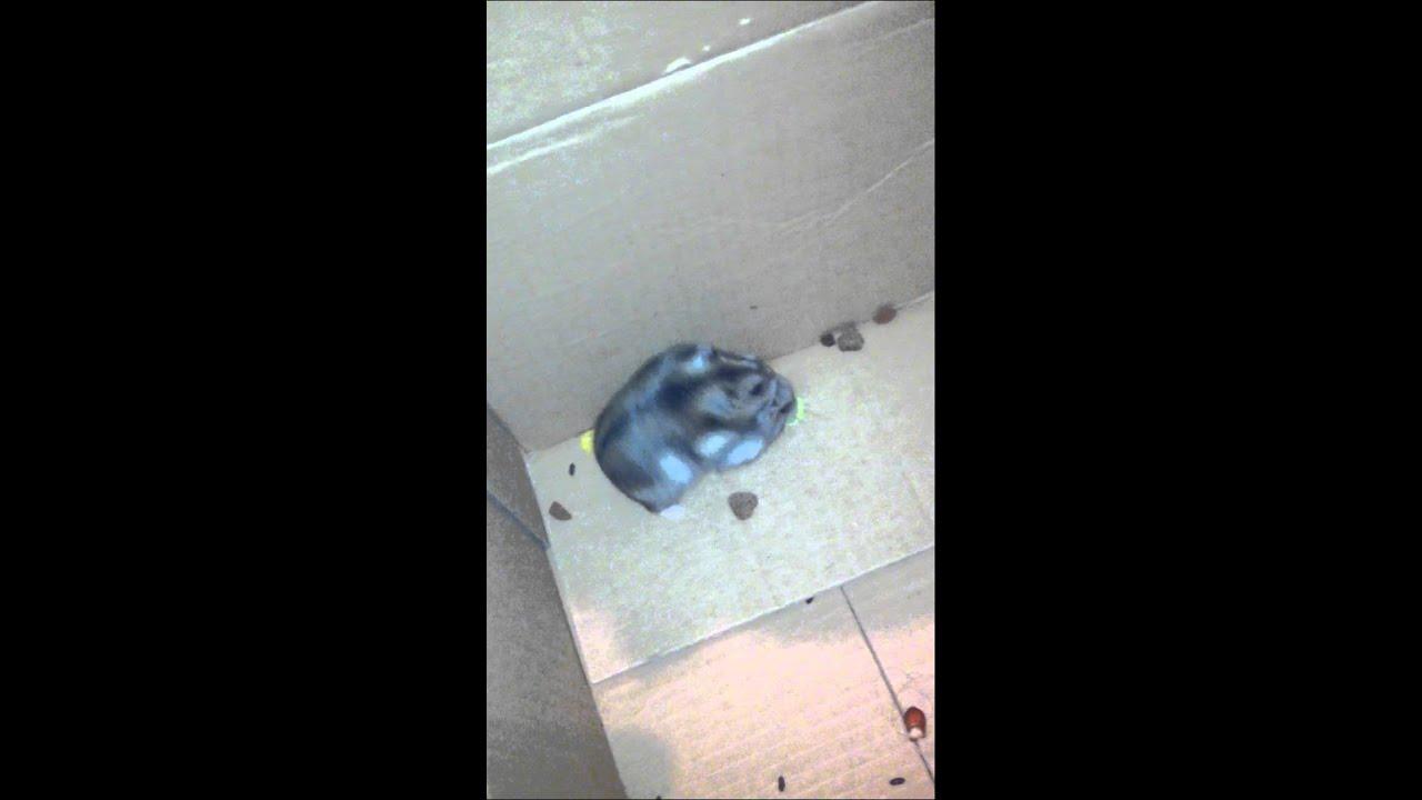 Hamster porn sight