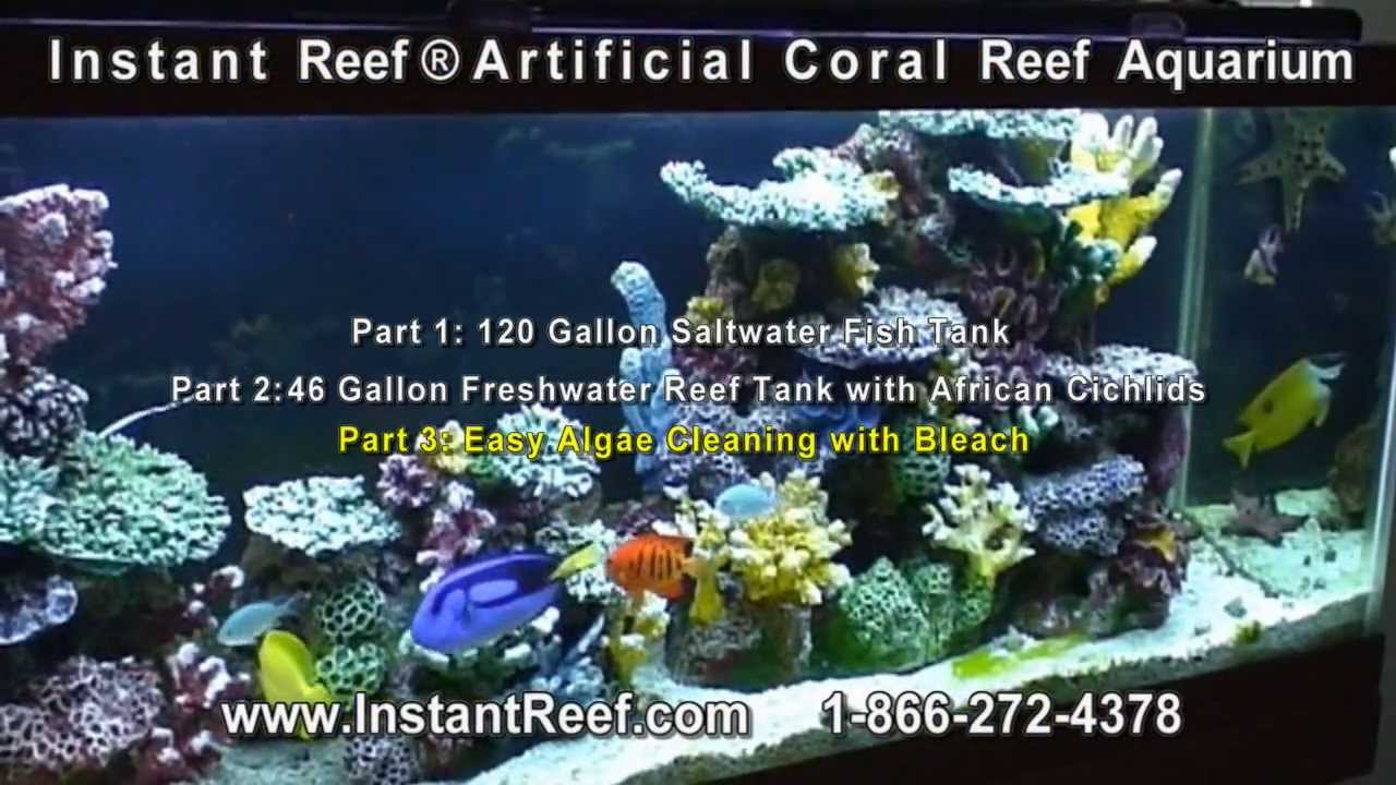 Artificial Coral Reef Aquarium Setup Amp Maintain Reef Tank