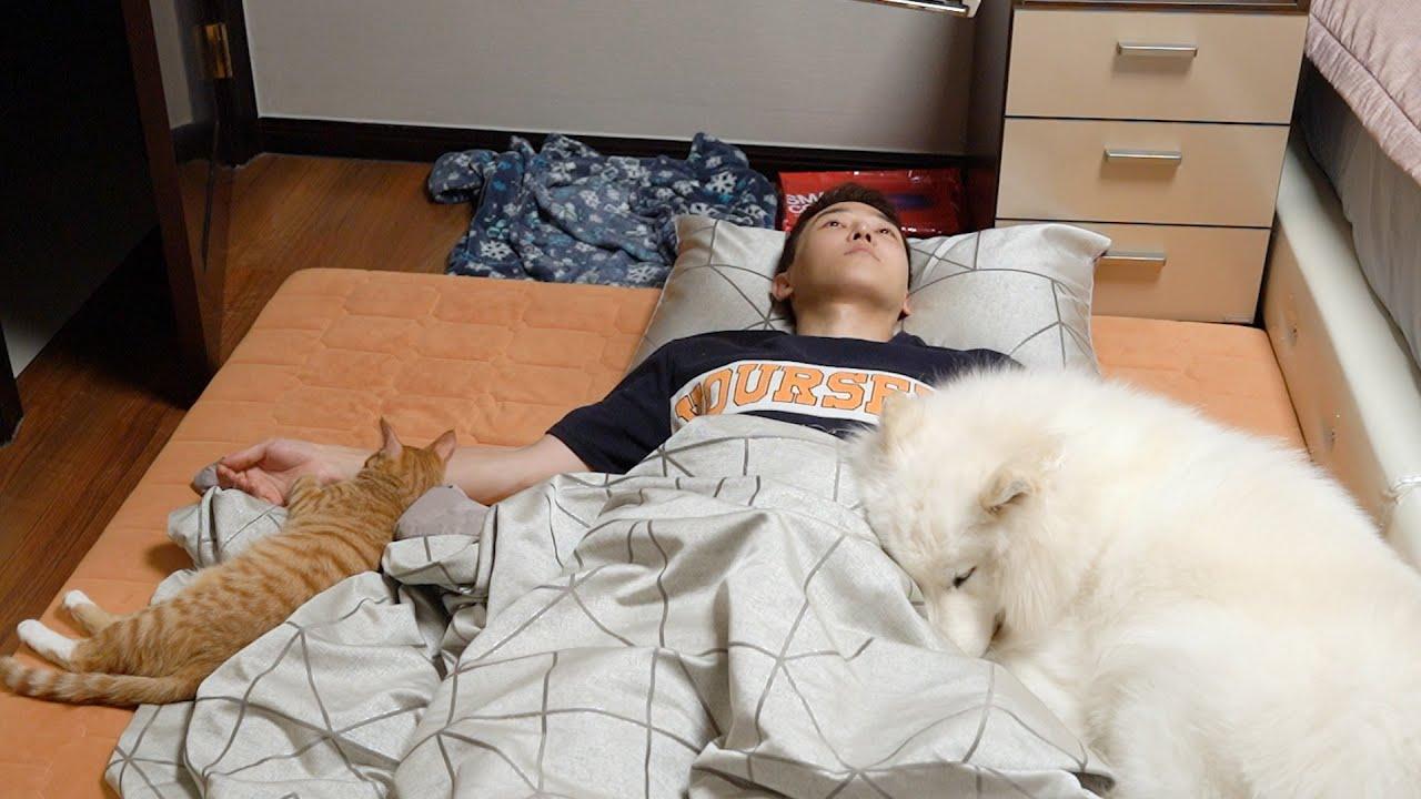 강아지와 고양이가 제일 좋아하는 잠자리는?