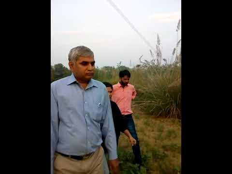 Contract farming of moringa(12)