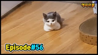 [2020]Dogs and Cat Funny Moments | Funny Animals Compilation #56