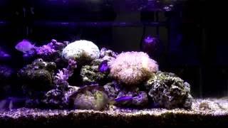 我的海水魚缸 (初めての海水魚_48cm水槽) 海水缸設置 重新上傳