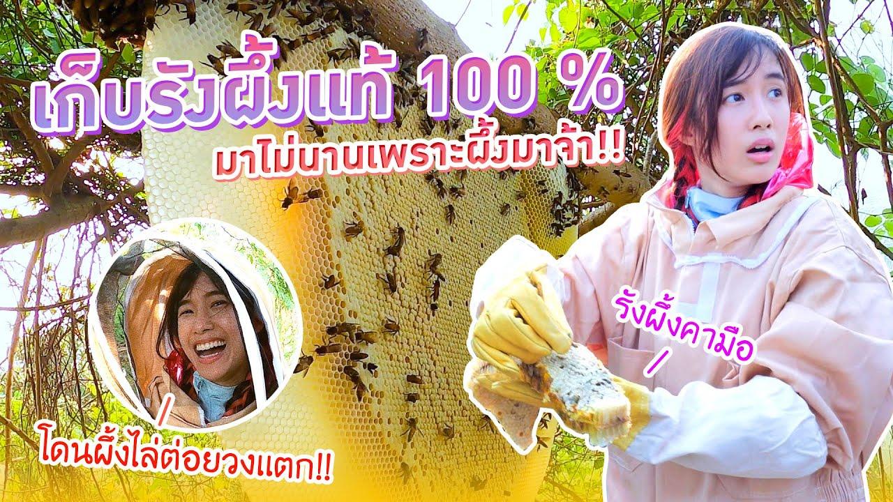 ตามหาน้ำผึ้งแท้จากรังธรรมชาติ (เกียร์หมา ตัวใครตัวมัน)