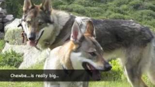 Diary of a Czechoslovakian Wolfdog, Ottokar
