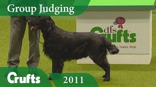 Flat Coated Retriever wins Gundog Group Judging at Crufts 2011 | Crufts Dog Show