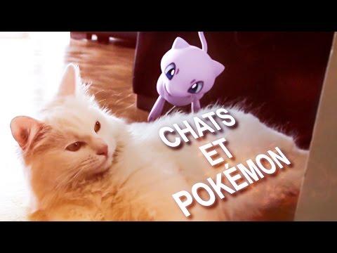 CHATS ET POKÉMON - PAROLE DE CHAT