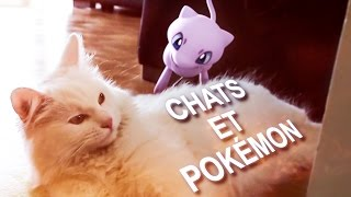 CHATS ET POKÉMON - PAROLE DE CHAT
