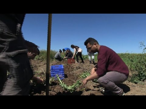 Refugees in Greece farm own crops to 'put an end to handouts'