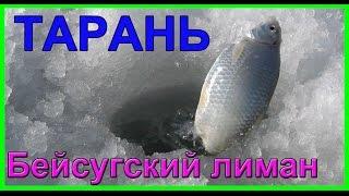 ловля ТАРАНІ взимку Ловля на поплавок. Січень. Бейсугский лиман. Насадка - підфарбована манка.Fishing