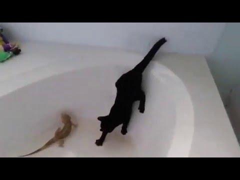 Кот в ванной ютуб