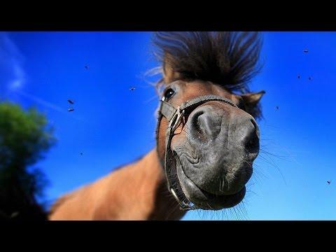 Приколы с участием лошадей смотреть видео онлайн
