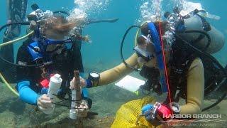 Black & Blue: Estuarine Discharge on St. Lucie Reef