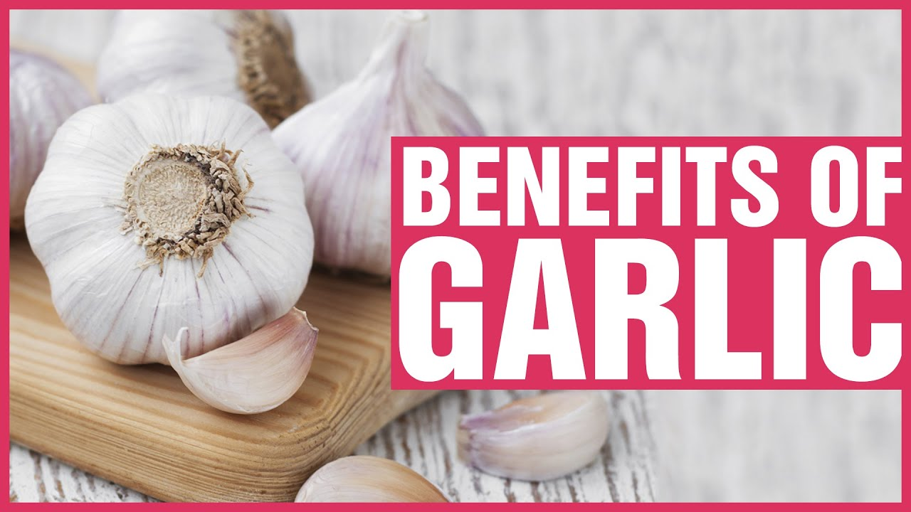 benefits of garlic Learn about the potential benefits of garlic including contraindications, adverse reactions, toxicology, pharmacology and historical usage.