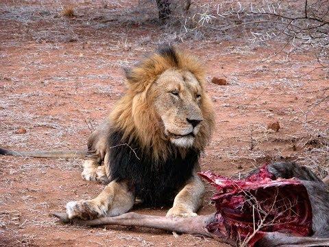 AUX CONFINS DE L'AFRIQUE 2 - SWAZILAND / PARC KRUGER