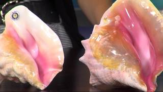 Award Winning Conch Shell Music Maker, Jayne of Rehoboth Beach, Teaches Us How to Play the Conch