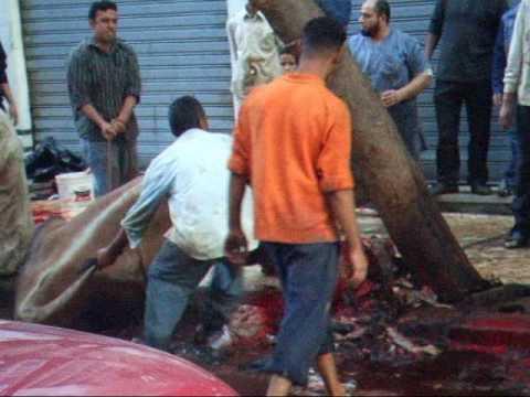 Eid al-Adha Sacrifice of a bull in Agouza, Cairo