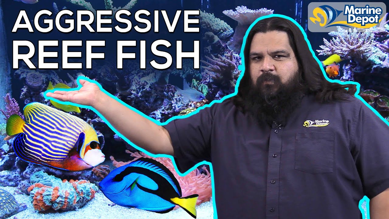 TOP 6 TIPS For Aggressive FISH In Your Reef Tank | How to Assemble a Tranquil Saltwater Aquarium